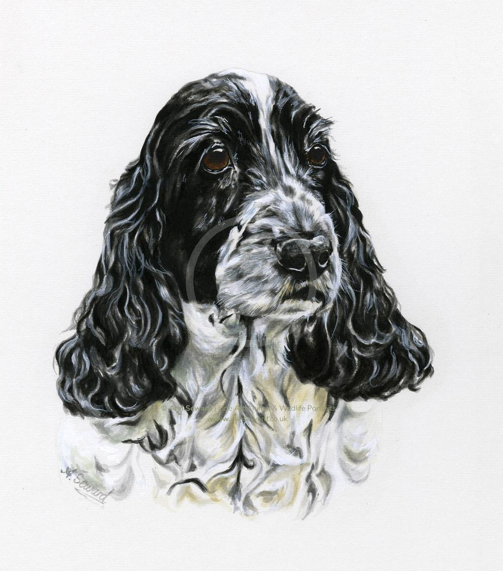 English Cocker Spaniel Portrait