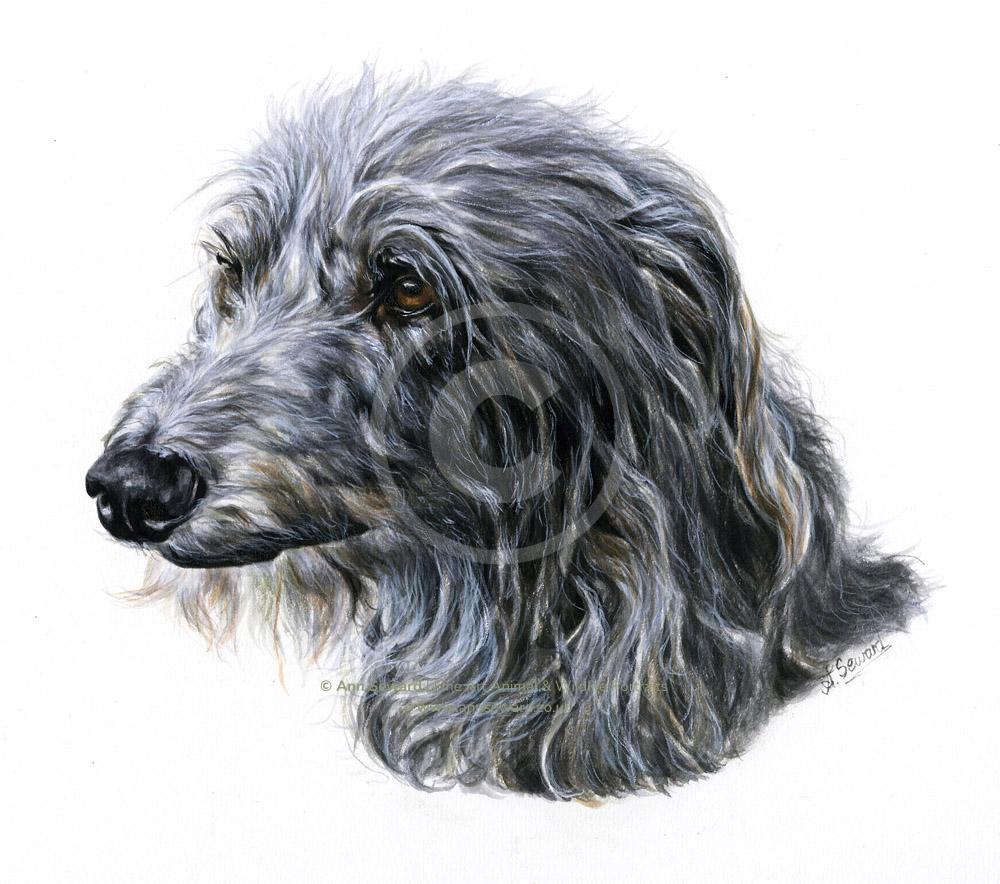 Deerhound Portrait