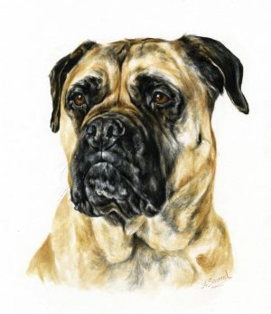 Bull Mastiff Portrait