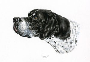 English Pointer Portrait