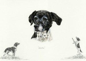 Terrier x Springer