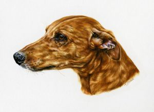 Smooth-Coated Lurcher