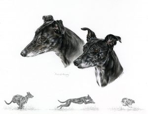 Two grey Lurchers