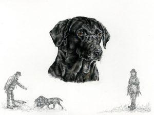 Working Black Labrador