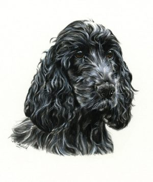 Cocker Spaniel Portrait