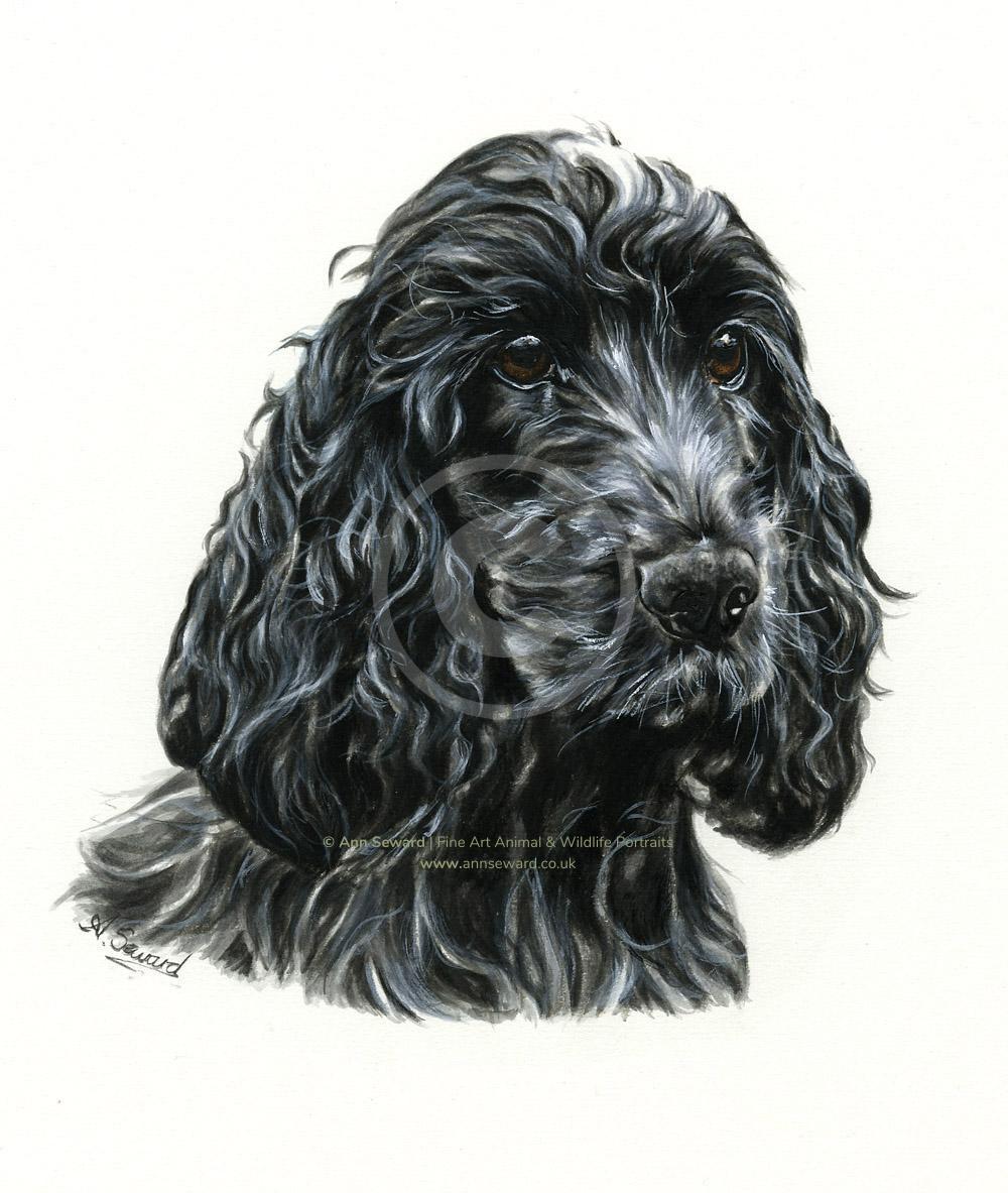 Cocker Spaniel Portrait