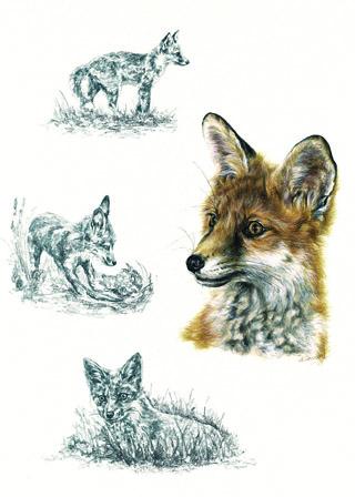 Foxcub greeting card