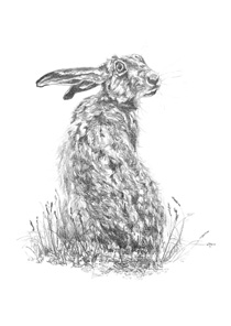 Hare Turning Notelet