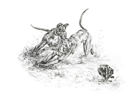 hare coursing notelet