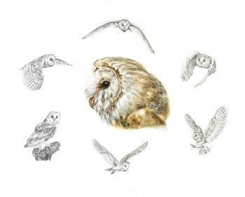 Raptors & Falconry Prints