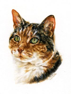 Tri-colour cat
