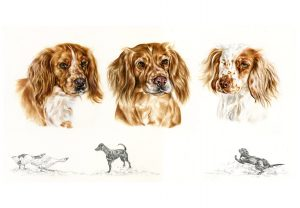 Golden Cocker Spaniels