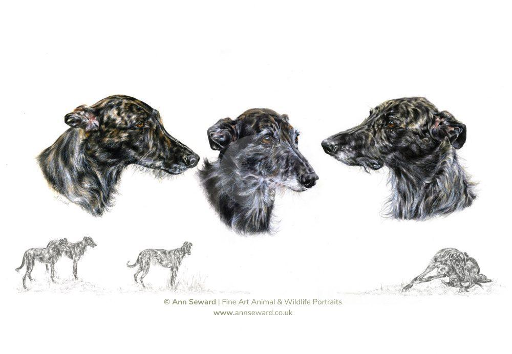 Three Grey Lurchers
