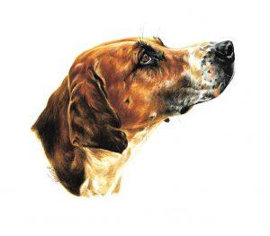 Tri colour foxhound