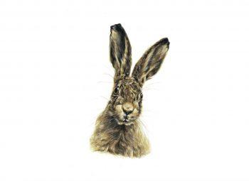 Hare Prints