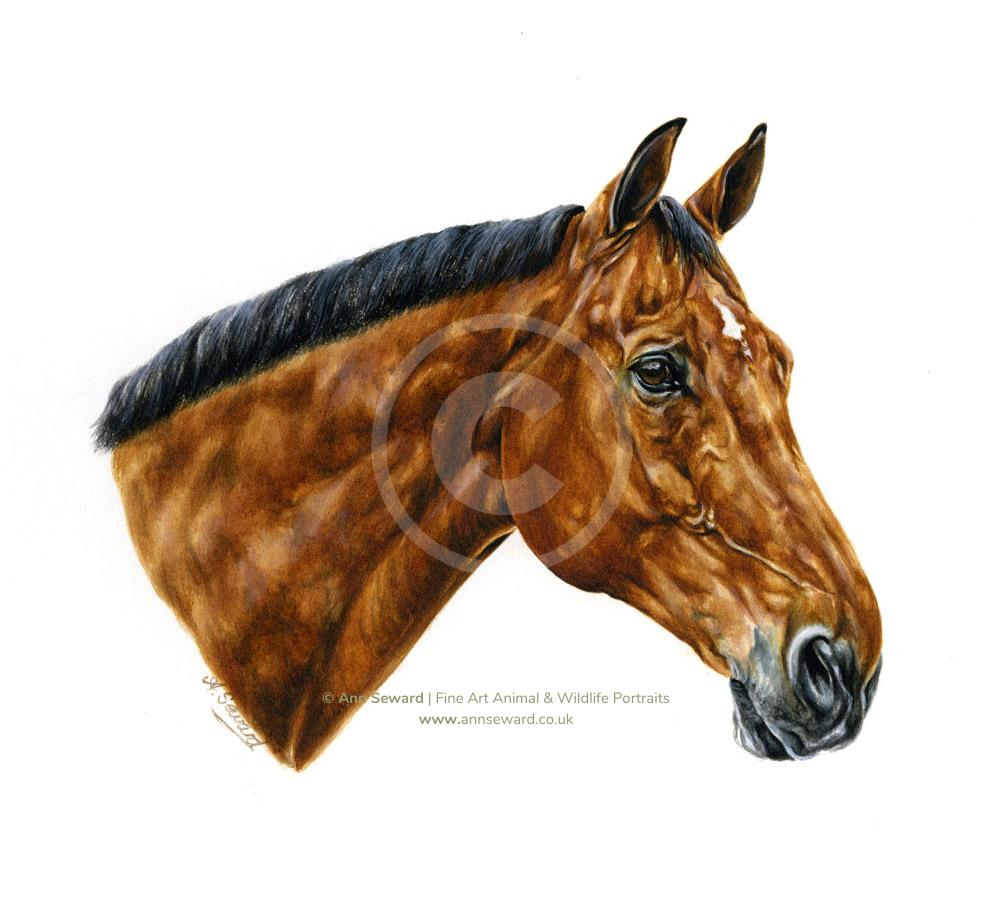 Bright Bay Warmblood