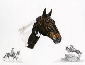 Coloured Mare - Horse Portrait
