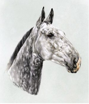 Grey Hunter Mare