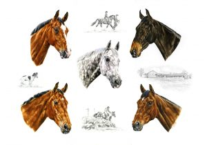 Five Competition Geldings