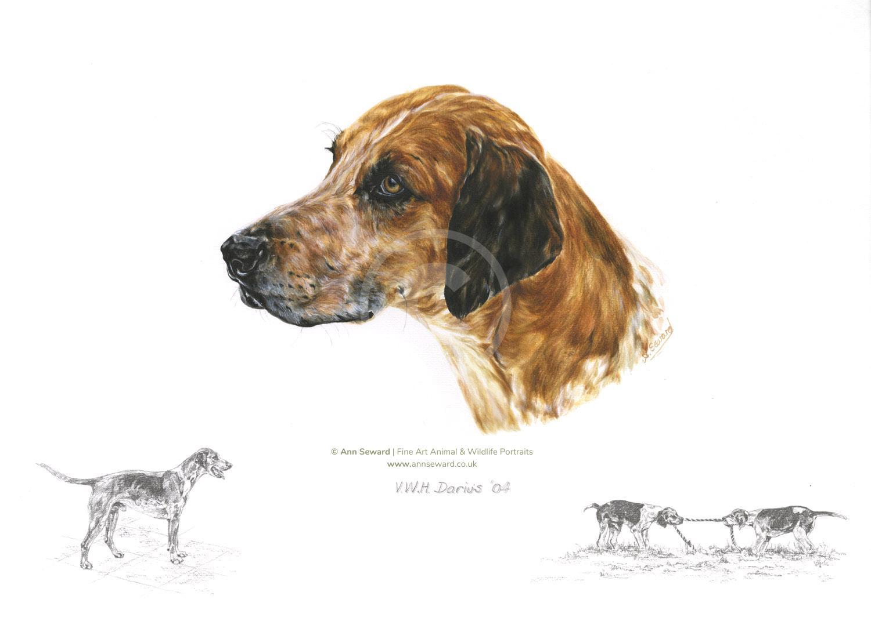 Foxhound VWH Darius