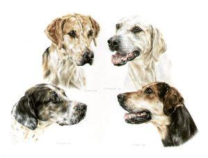 Four English Foxhounds