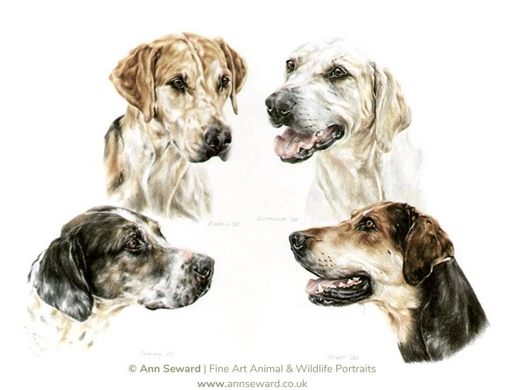 Four English Foxhounds