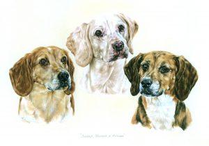 Three Beagles