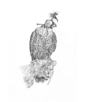 Hooded - Peregrine Falcon