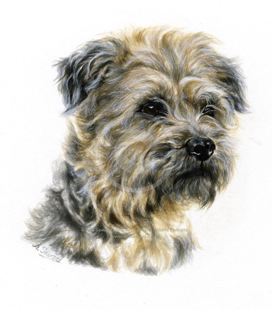 Border Terrier cross