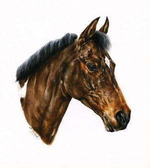 Coloured Pony Mare