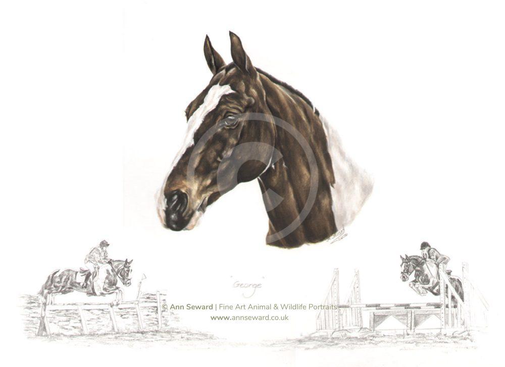 Coloured Cob Pony Portrait