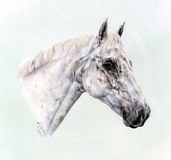 Grey Connemara Pony