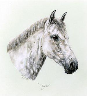 Grey Pony Portrait