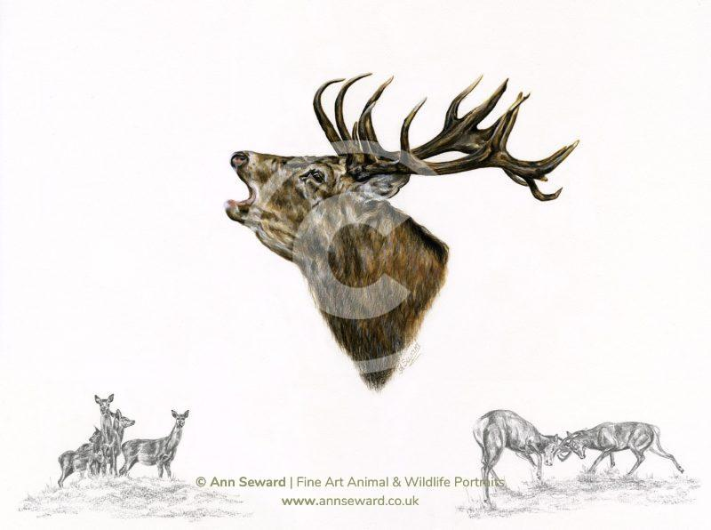 Roaring Red Stag